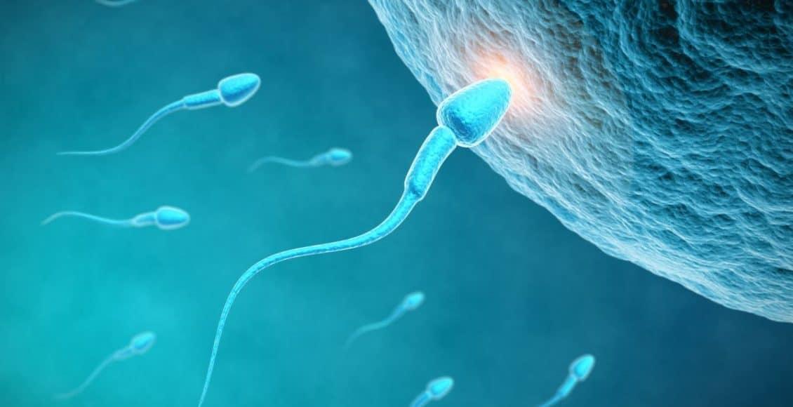 متى يحدث الحمل