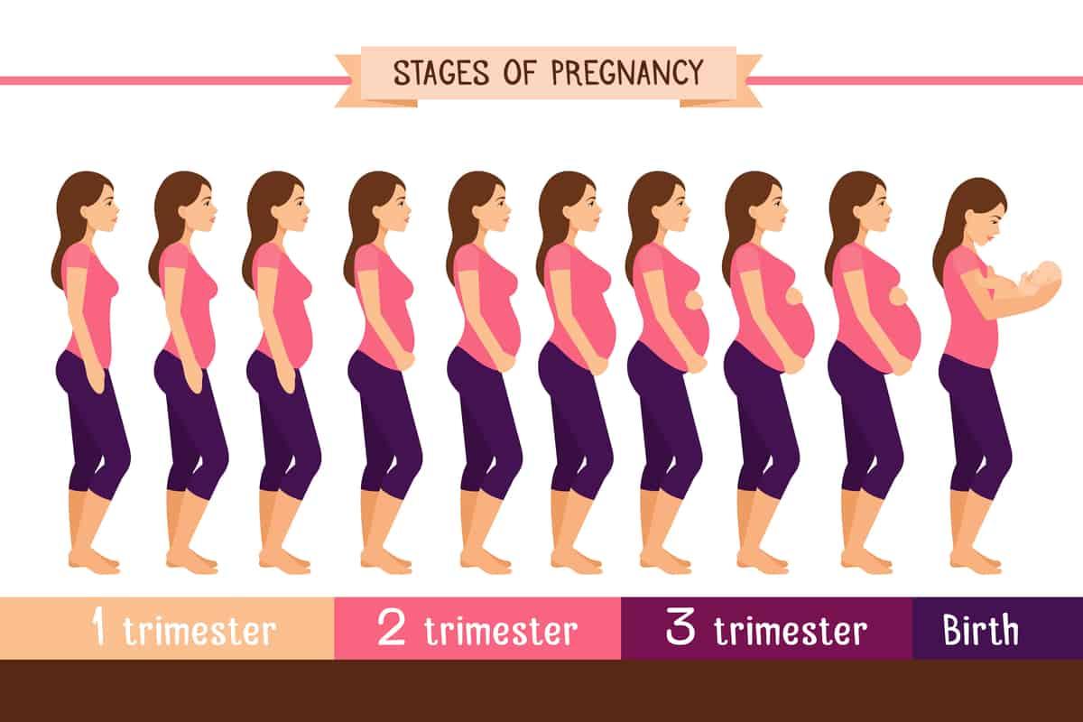 بحث كامل عن الحمل والولادة