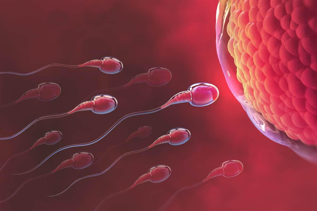 بداية تكوّن الجنين عملية الإخصاب