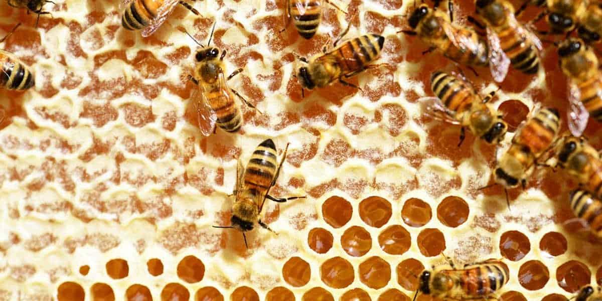 فوائد العسل للحامل والجنين