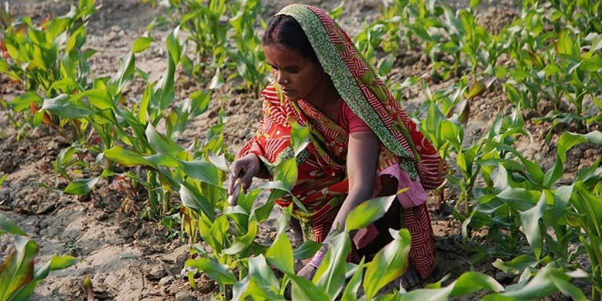 القسط الهندي للحامل