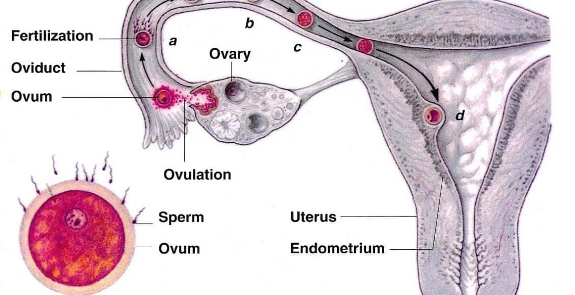 أعراض الحمل بعد التبويض بثلاثة أيام